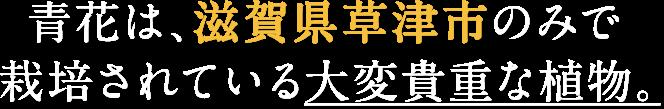 青花は、滋賀県草津市のみで栽培されている大変貴重な植物。